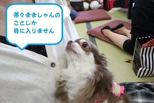 IMG_0582え