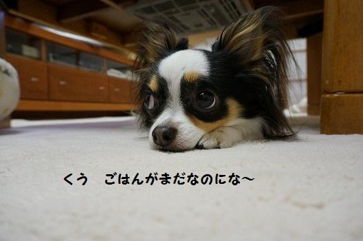 DSC04976.jpg