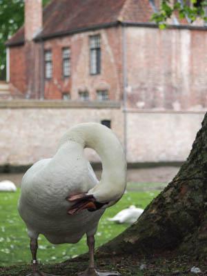 Brugge201430
