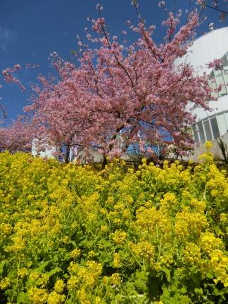 まつだ桜祭り2