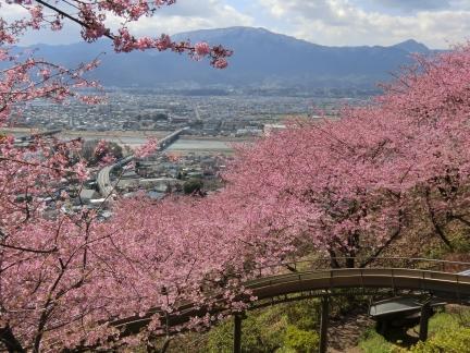 まつだの桜と町並み