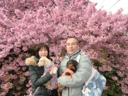 かじやの桜の前で