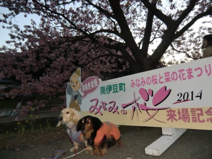 みなみの桜来場記念