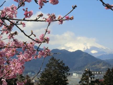 富士山とまつだの桜