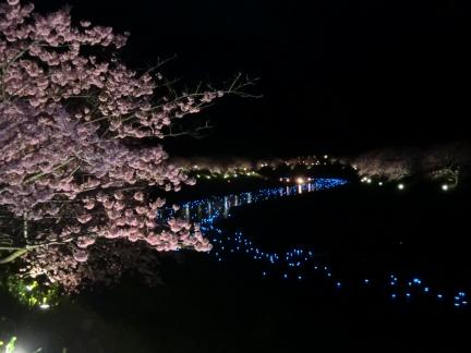夜桜と流れ星1