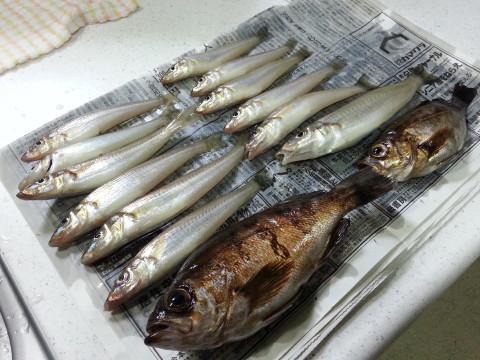 0503横浜沖堤