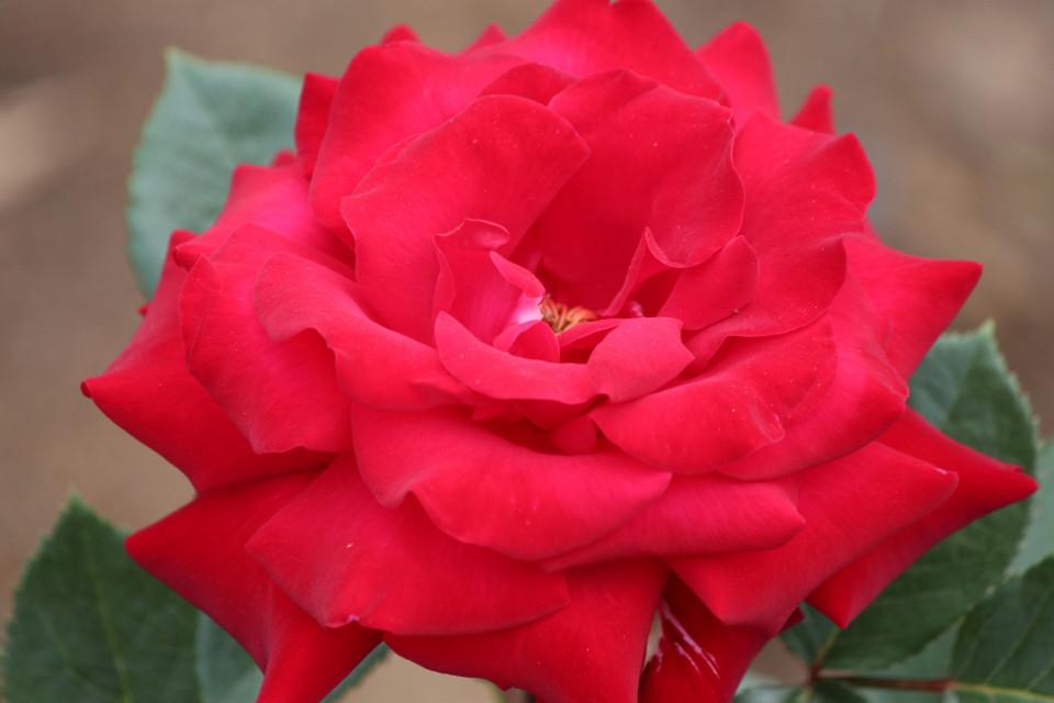 0525薔薇園