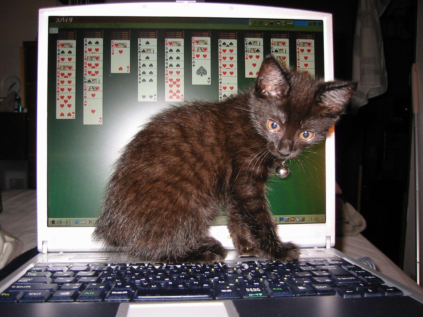 おじゃま黒猫1