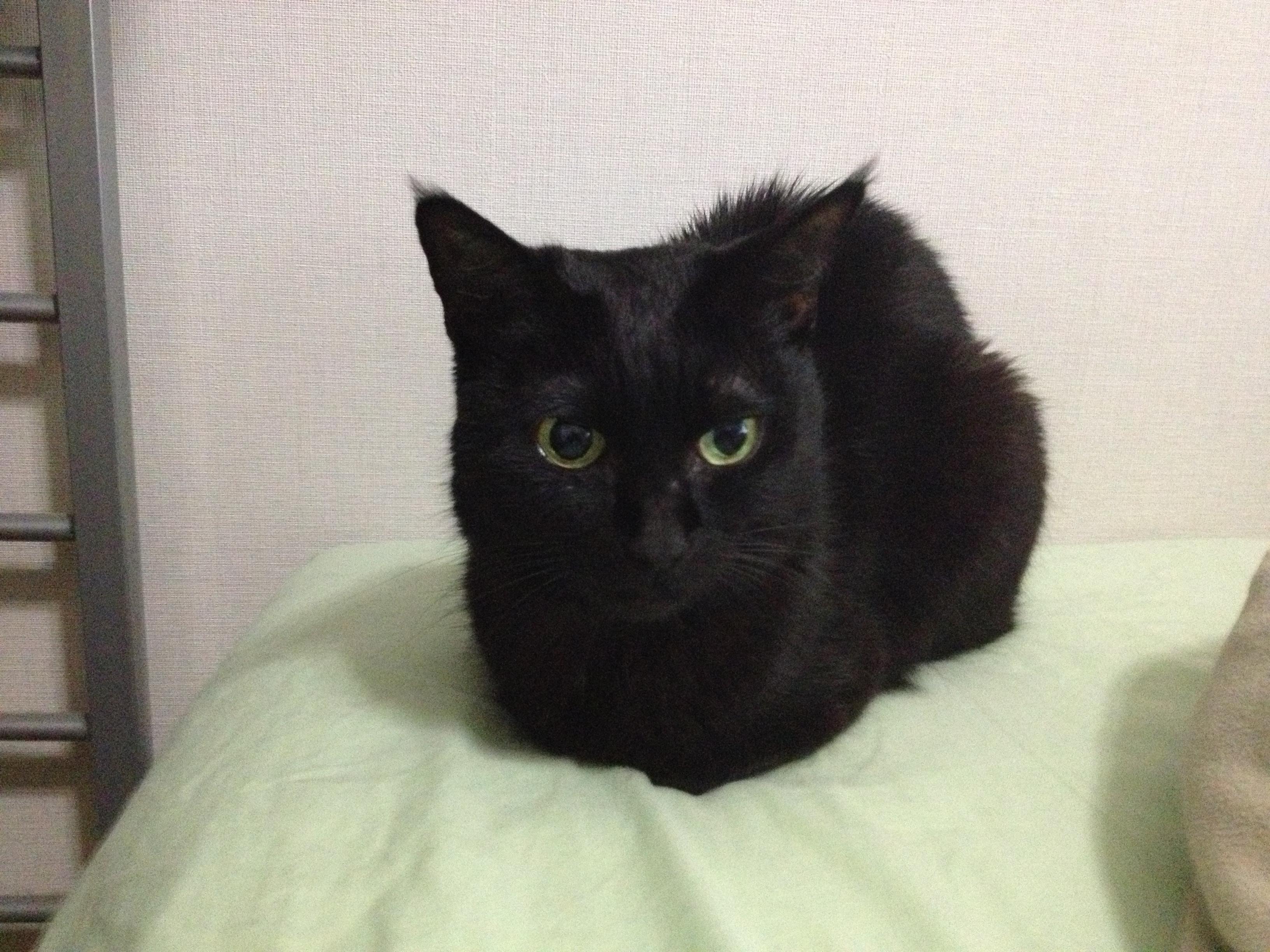 黒猫 10ヶ月前1