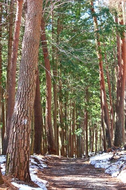 20140324森の散策路