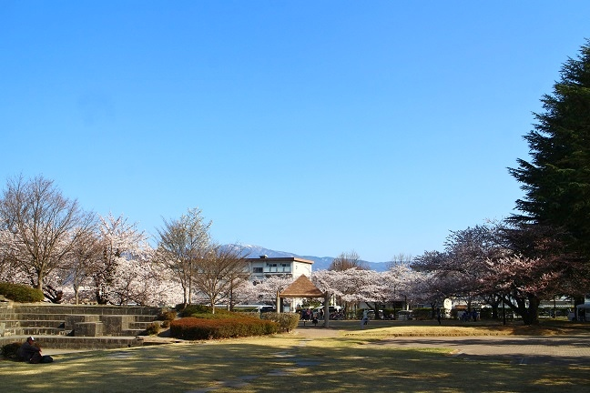 20140415桜1