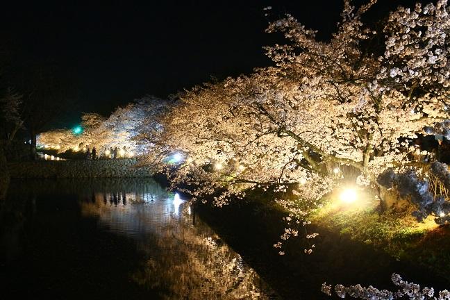20140416桜1