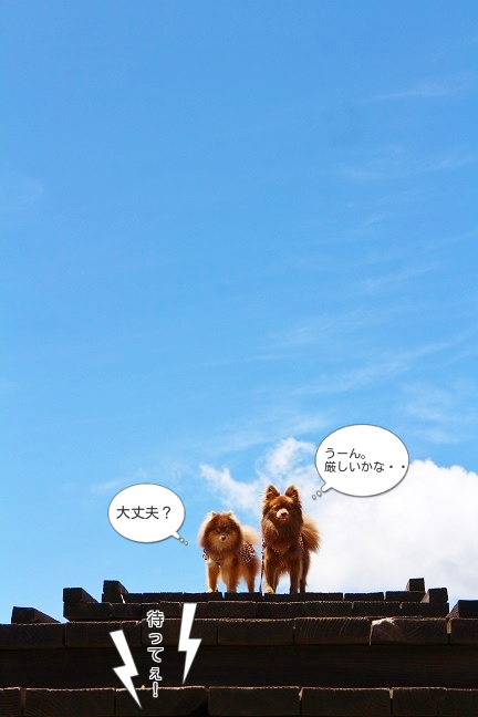 201405202.png