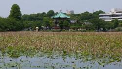 20140524上野公園1