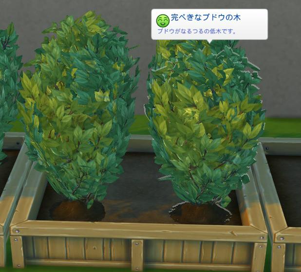 Sims4c1.jpg