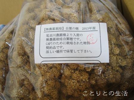 無農薬栽培白粟の穂