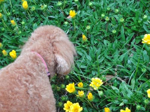 ココアと花