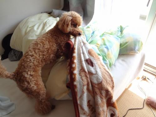ココア 毛布5