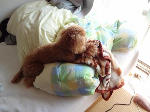 ココア 毛布7
