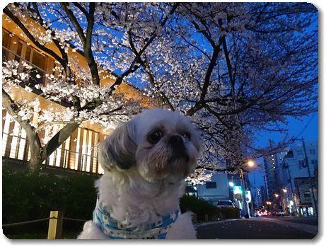 夜桜もキレイー♪