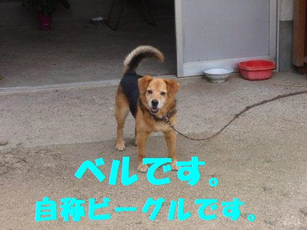 P7200789.jpg