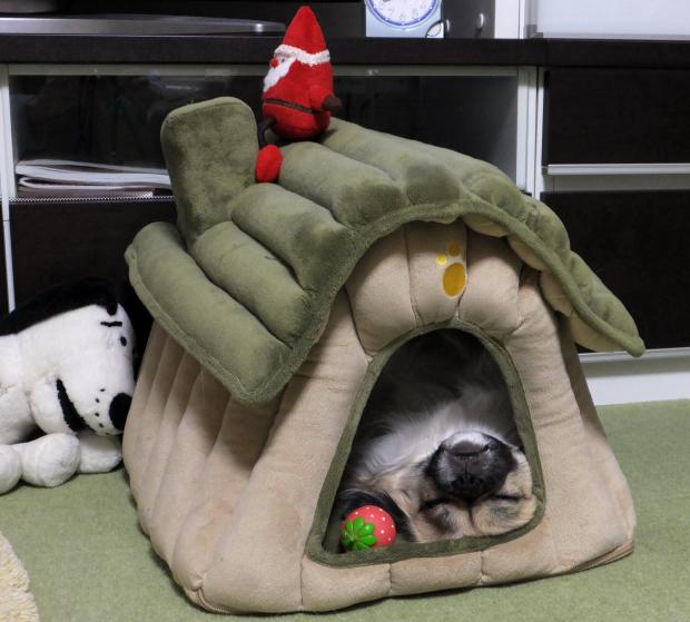 ④山小屋でお昼寝