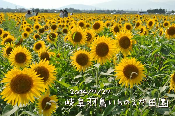 DSC_1520_2.jpg