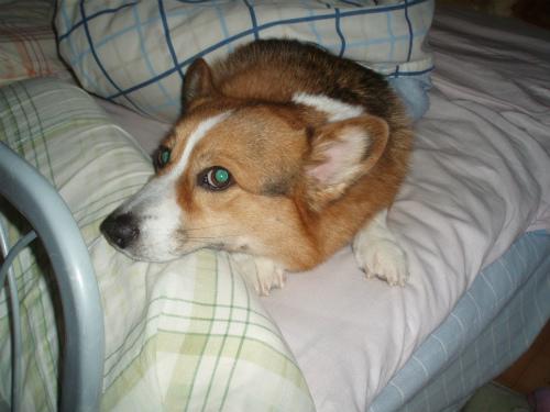パパのベッドでねぇねのぬくもり感じてた