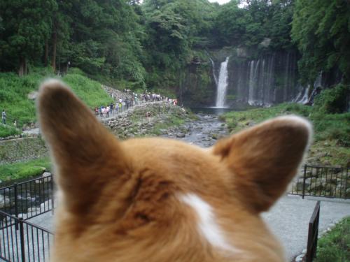 もーたんからの白糸の滝