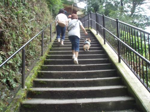 階段疲れた~
