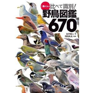 鳥くんの本