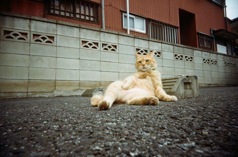 kenいつも可愛いと思ったら大間違いだVivitar Ultra WideSlim (Kodak Gold 100