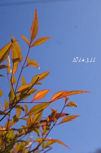 DSC06296-1.jpg