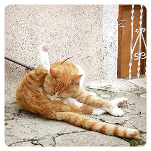 宿の近くにいた猫
