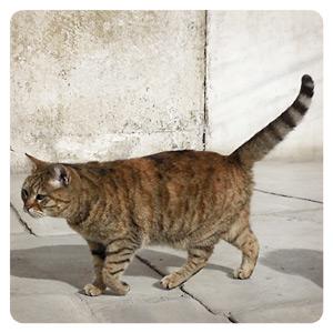 アヤ・ソフィアのグリちゃん似ネコ