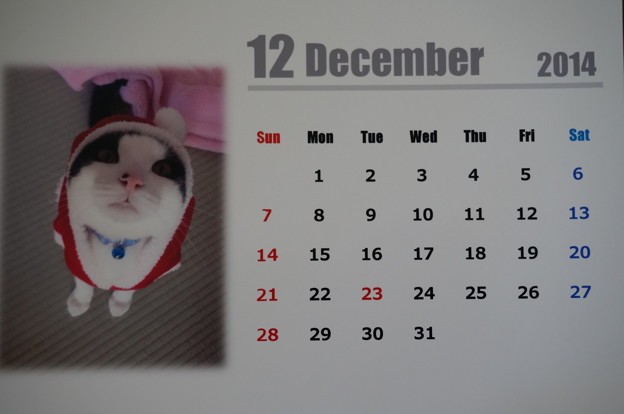 12月は、ぼくちんサンタにゃ