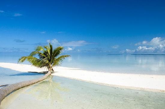 fallen-coconut-tree-on.jpg