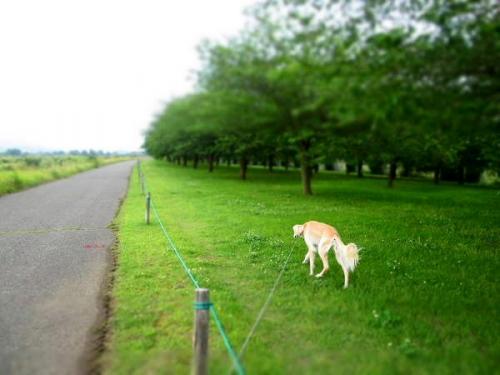 6月散歩日和2
