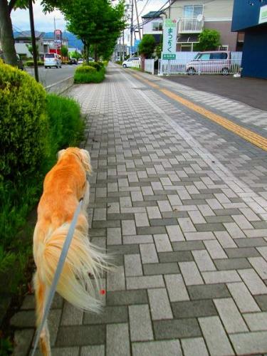 散歩日和と病み上がり2