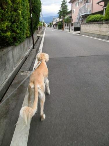 散歩日和と病み上がり3