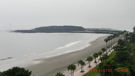 青島海岸ウミガメ