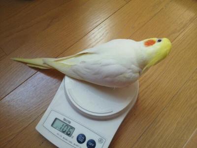 体重測定だり