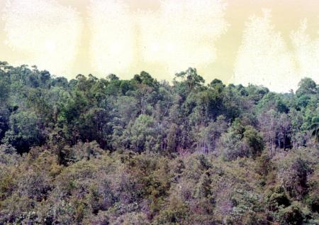 1_Msiaジャングル