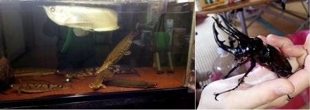 動物14_4_28 奇妙な魚