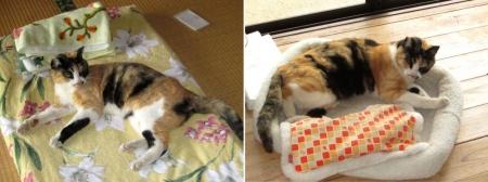 DIY14_5_30 荒井の理猫