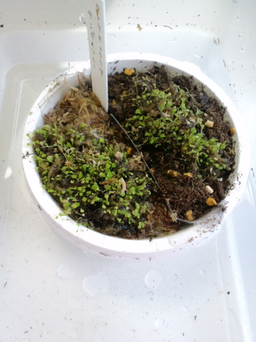 サンダー用土別鉢