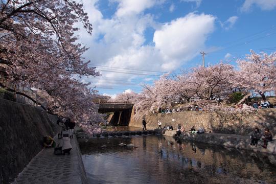 20140406_shukugawa_park-01.jpg