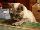 Img304_cat_big.jpg