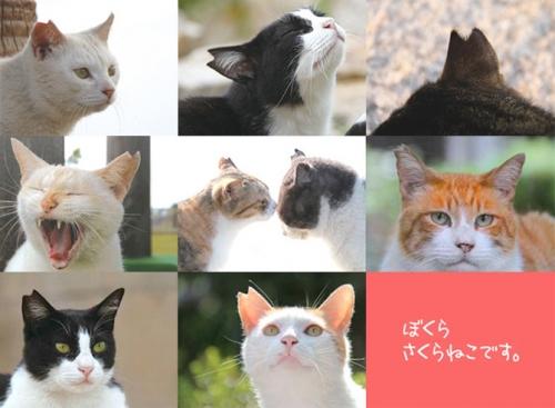 main_image_1.jpg