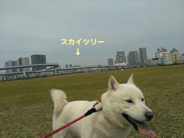 2014.4.13 竜牙3